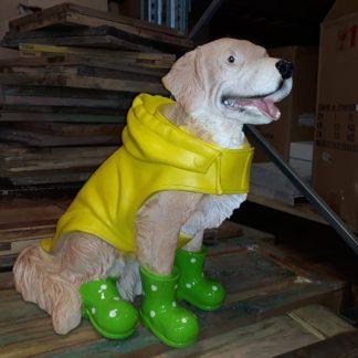 Hond-in-regenpak